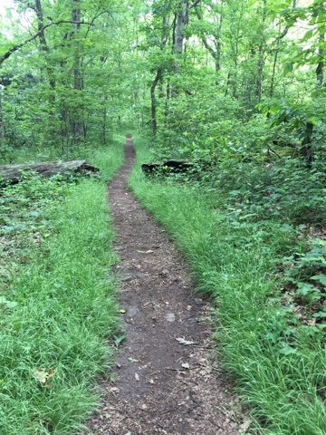a beautify path on a grassy area of the Appalachian Trail