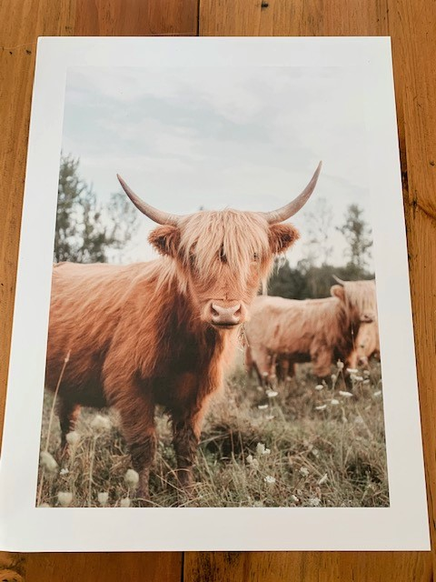 cow print from the Poster Store