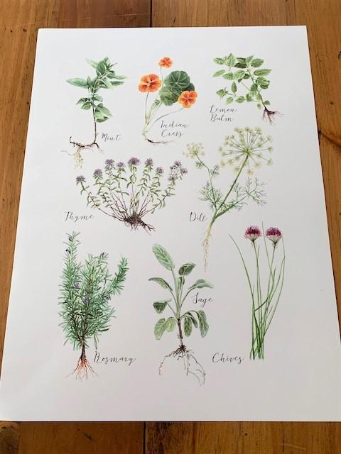 vintage inspired herb print