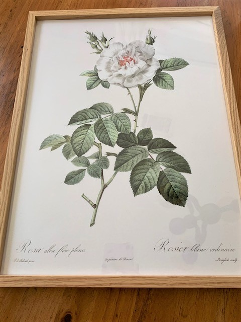 vintage inspired floral print from the Poster Store